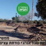 ממשיכים לרמוס: האם נובל אנרג'י עומדת לכרות עצים רבים בניגוד לחוק?